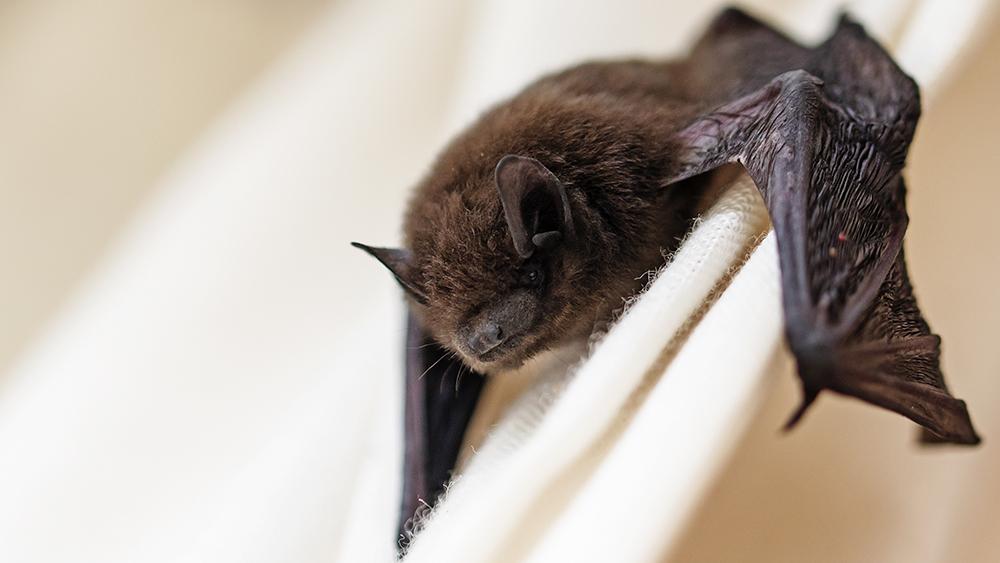 bat control approaches